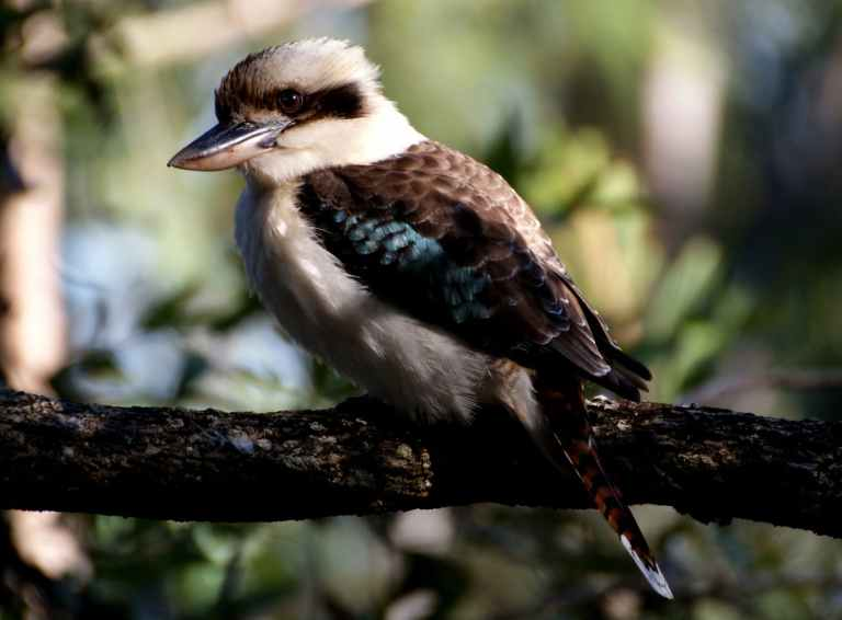 gray and brown medium size beak bird on tree branch