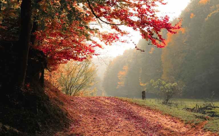 autumn daylight fall fog