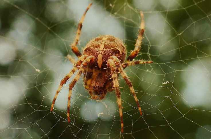 insect cobweb spider spider s web