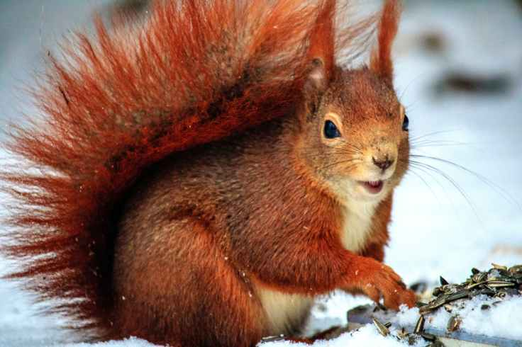 brown squirrel above snow at daytime in selective focus photo